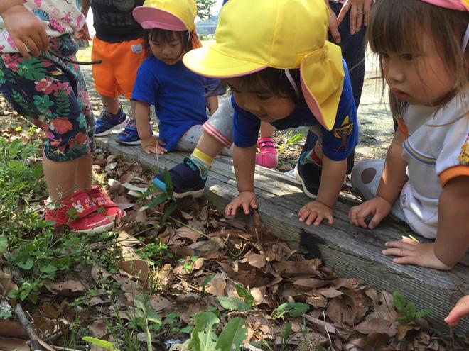 Thích thú với cách người Nhật dùng côn trùng làm giáo cụ dạy trẻ - Ảnh 8.